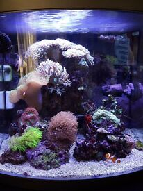 Marine full set fish tank