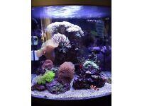 Marine full set fish tank
