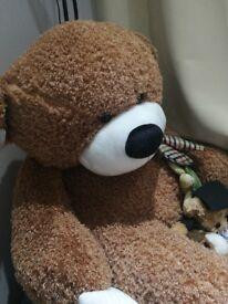 Giant Teddy for sale