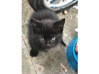 black kittens for sale £60 each