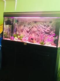 Fish 🐟 tank beautiful