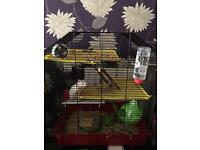 2 female rats & large cage
