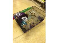 Hamster with set up