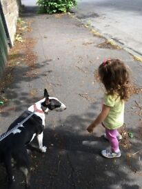 Small Dog Walker Glasgow westend