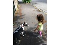 Small Dog Walker Glasgow westend