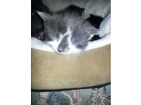 MISSING CAT SINCE Dec10 th. HESSETT,IP30 9BJ