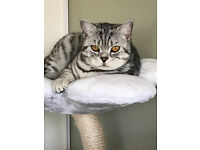 British female spotted cat