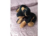 Small black & tan beanie type dog