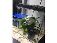 Fluval flora 30l nano fish tank