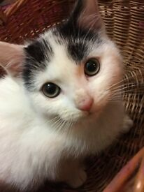 2 kittens looking for a loving home (urgent