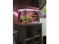 Juwel Fish Tank