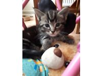 4 9 week old kittens needs new home
