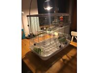 A budgie cage