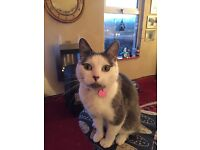 Little Missy missing from Windsor Ave Malone BT9