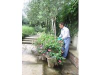Gardener | Garden Maintenance & Outdoor Services