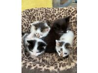 4 stunning kittens looking for good home. Pictures updated.