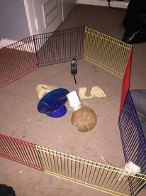 2 female gerbils with accessories