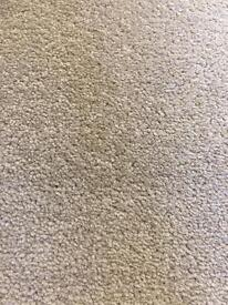 Fanfare Doeskin New Carpet Ab 3.92 x 4.00 Free Local Delivery