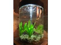 Biube aquarium for sale