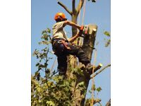 TREE SURGEON - TREES REMOVED - TREE SURGERY - TREE FELLING - TREE REMOVAL - TREE CARE SPECIALISTS