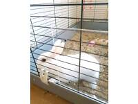 White rabbit and large hutch