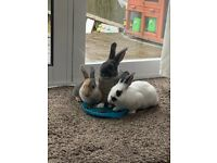 Bunnies looking for a new home