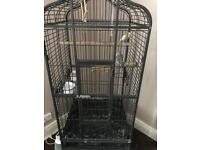 Beautiful parrot cage with 2x male 6 month old budgies tame but not trained
