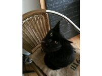 Lost black male cat no collar or chip? Name ronny