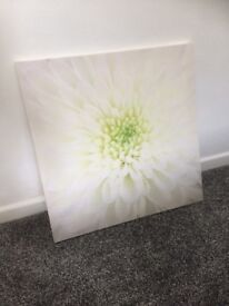 Lime green flower canvas wall art picture