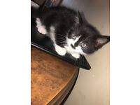 3 beautiful kittens for sale take now