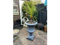 Large grey urn planter garden pot with palm plant