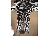 Zebra hide rug