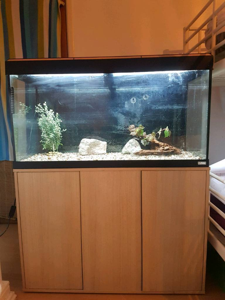 fluval 180 liter fish tank and stand for sale in. Black Bedroom Furniture Sets. Home Design Ideas
