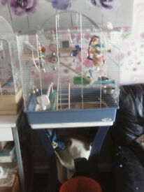 3 male budgies n cage