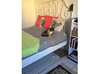 Free: Beautiful little cat needs loving home...