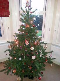 6FT Mountain Pine Christmas Tree
