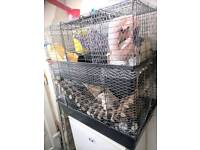 2 Female Rats, Cage, Accessories and huge bag of food