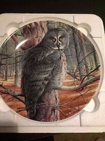 Great grey owl plate