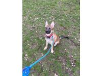 4 month old puppy NOW REHOMED