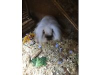 Free to a loving home - 2 gorgeous rabbits and hutch