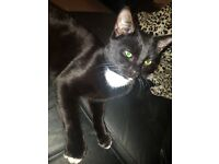 2 black cats for rehoming