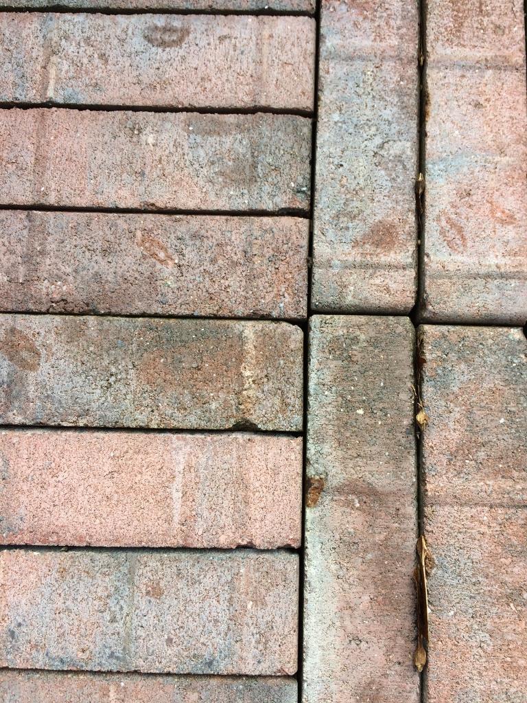 Paving bricks . 40 pence each
