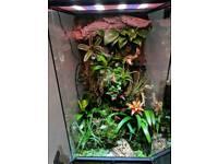 Extra large bio active terrarium with extras
