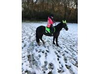 14.3hh confidence giving mare horse for share/part loan
