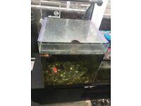Fish tank 55L