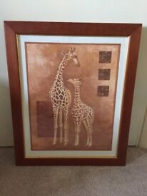 Giraffe framed picture