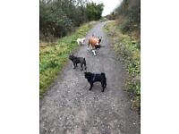 Dog walking service. Essex or City of London