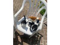 Kittens. Read description