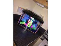 3 fish and fish tank