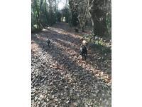 Dog Walking Bromley